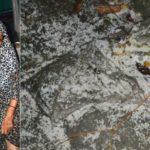 চান্দিনায় ৭ পরিবারের ১৩ ঘরে হামলা-ভাংচুর; আটক ২