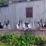 পুরুষ শূন্য হয়ে পড়েছে নবীনগরের থানকান্দি গ্রাম, এক গ্রুপের প্রধান গ্রেপ্তার