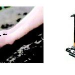 শাহরাস্তি উপজেলা আনসার ভিডিপি সদস্যদের মাঝে স্যানিটেশন টয়লেট ও গাছের চারা বিতরণ