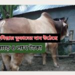 কুমিল্লায় কোরবানিতে তুফানের দাম সাড়ে ৪ লাখ টাকা