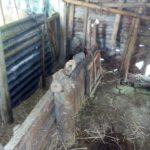 কুমিল্লা সদর দক্ষিণে একই পরিবারের ৫ টি গরু চুরি