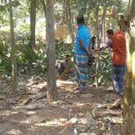 কুমিল্লায় অবৈধভাবে জায়গা দখল ও গাছ কাটার অভিযোগ
