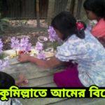কুমিল্লাতে আমের বিয়ে !