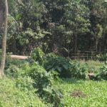 মুরাদনগরে নোটিশ দিয়েও ঠেকানো যাচ্ছেনা শত বছরের পুরনো খাল দখল