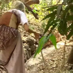 প্রকৃতির প্রতি অগাধ ভালোবাসার কারণে ৭৯ বছর বিদ্যুৎহীন আছেন অধ্যাপিকা