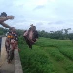 বুড়িচংয়ে চামড়ার ন্যায্য মূল্য না পাওয়ায় ২ শতাধিক চামড়া গোমতী নদীতে নিক্ষেপ