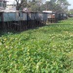 চাঁদপুরের মহামায়ায় জনগুরুত্বপূর্ণ সিএন্ডবি খাল এখন অস্তিত্ব সংকটে