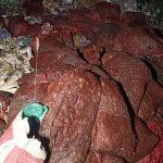 কুমিল্লায় ভাগাড়ে ফেলে হয়েছে ৭০ বস্তা পঁচা পেঁয়াজ