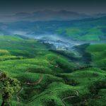 'মুন্নার' কেরালার কাশ্মীর খ্যাত শৈল শহর
