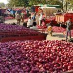 আমদানির পেঁয়াজ কিনছেনা রাজ্য, উভয় সংকটে পড়েছে মোদী সরকার