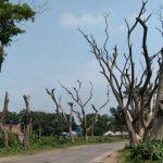 দেবিদ্বারের ভিরাল্লা থেকে জাফরগঞ্জ পর্যন্ত ইটভাটা সংলগ্ন মহাসড়কের গাছগুলো মরে যাচ্ছে