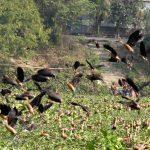 কুমিল্লার গ্রামের পরিবেশে বেড়েছে পাখির আনাগোনা