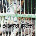 কুমিল্লার লাকসামে ফসলি জমিতে মিললো ৩ 'চিতা শাবক'