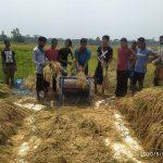 দাউদকান্দি পৌর এলাকাসহ দুই ইউনিয়নে কৃষকের ধান কেটে দিলো ব্যারিষ্টার নাইমের নেতাকর্মীরা