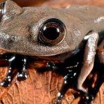 বিলুপ্ত ঘোষিত প্রজাতিসহ নতুন প্রজাতির ২০টি উদ্ভিদ ও প্রাণীর সন্ধান