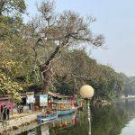 কুমিল্লা ধর্মসাগরে আম গাছ আতঙ্ক!