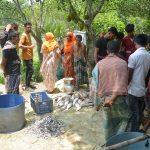 মুরাদনগরে পুকুরে বিষ প্রয়োগ করে ১৪ লাখ টাকার মাছ নিধন