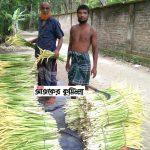 কুমিল্লার বরুড়ায় সর্বত্র বিক্রি হচ্ছে কচুর ফুল