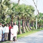 তালগাছের গ্রাম কুমিল্লার সাতঘরিয়া