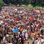 কুমিল্লার কোরবানির হাট যেন জনসমুদ্র: কে বলবে করোনা আছে
